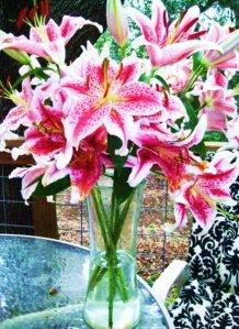 kates flower
